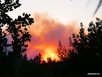 אש בשדה קוצים  (נכתב בעקבות גל השריפות שפקד את הארץ בסוף נובמבר)