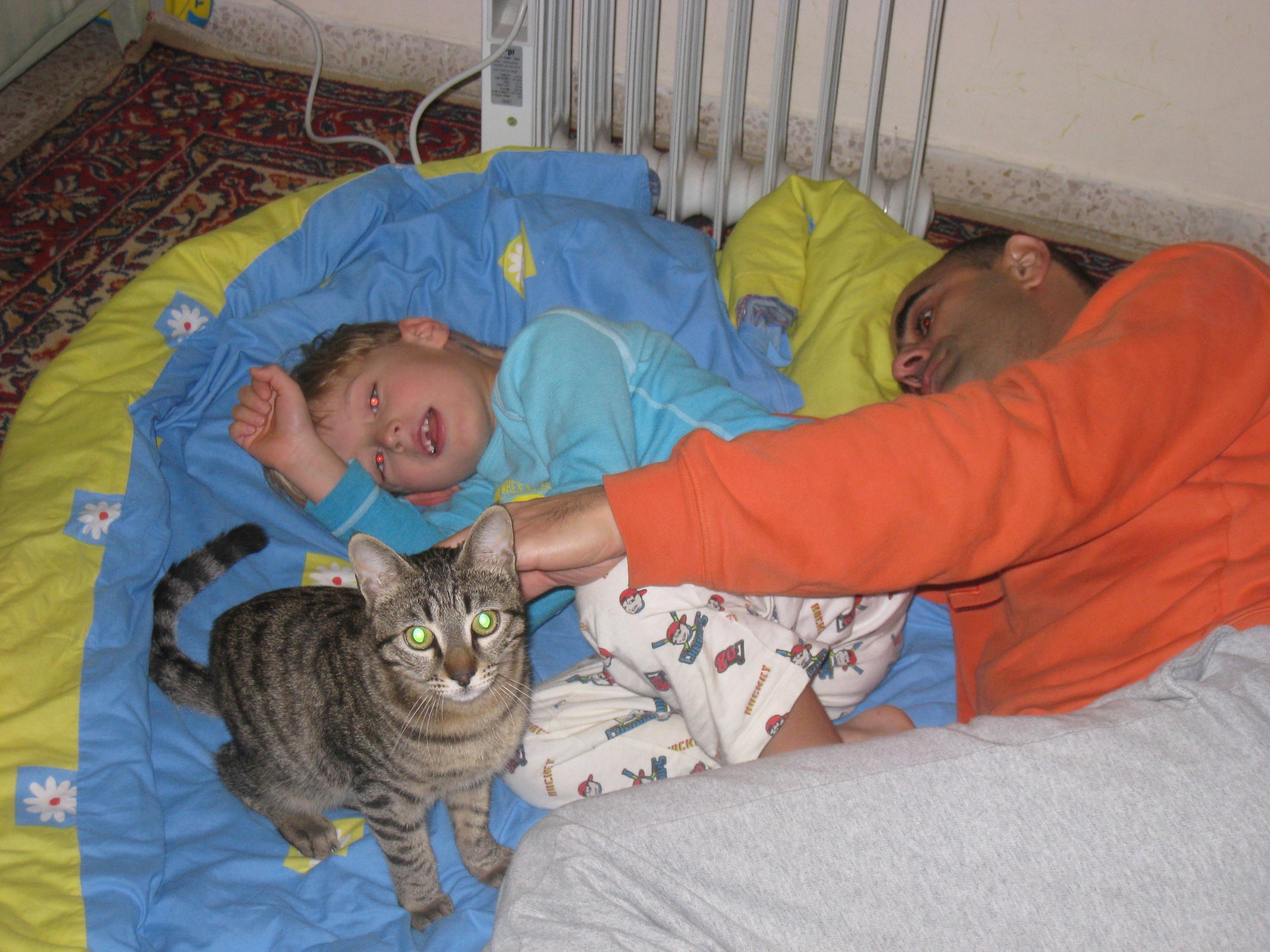 חתול ושמו אפרים